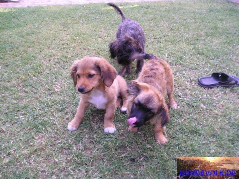 Meine Rescue-Hunde auf Kreta