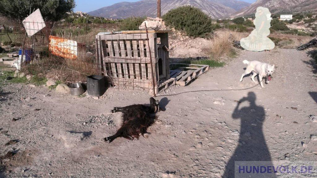 Kettenhunde