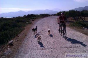 Fahrrad-Tour mit mehreren Hunden
