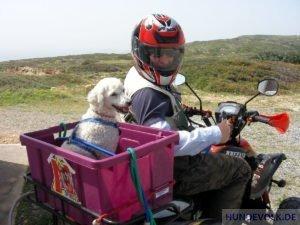Hund auf Quad-Bike