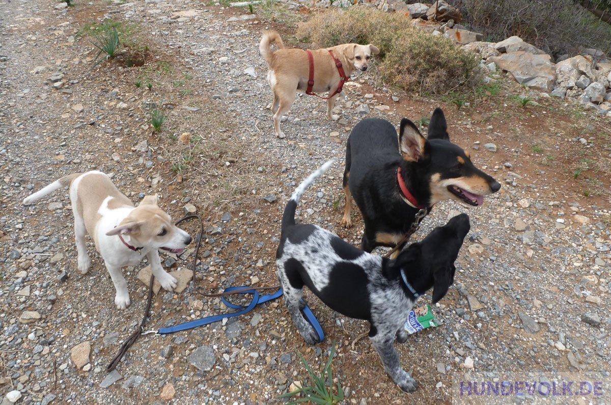 Hunde des Südens