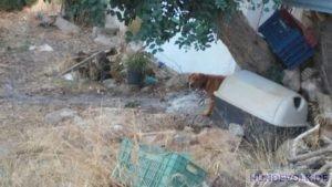Hund am Agios Haralampos Hügel, Agios Nikolaos.