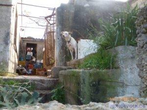 Tiermissbrauch Neapoli 15.12.2019