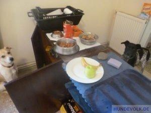 Vorbereitung des Futters für das Rudel