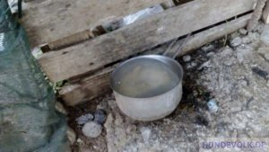 Tiermissbrauch Flamouriana