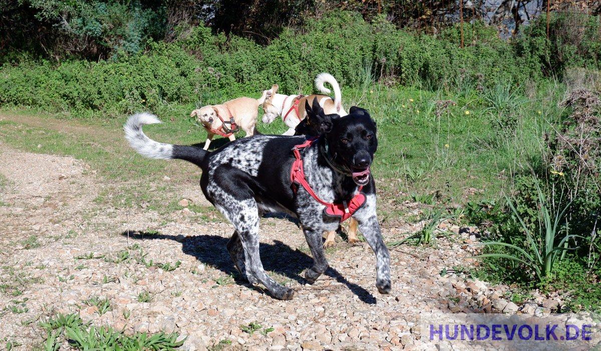 glückliche und zufriedene Hunde