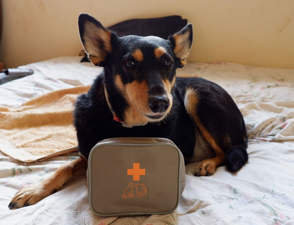 Erste-Hilfe-Set Hunde