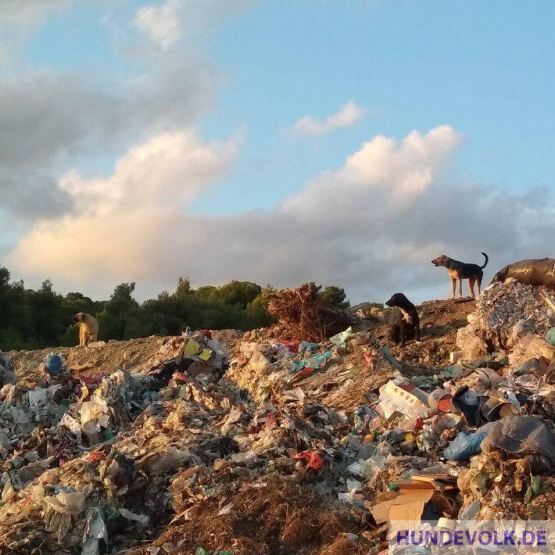 Die Müllhunde