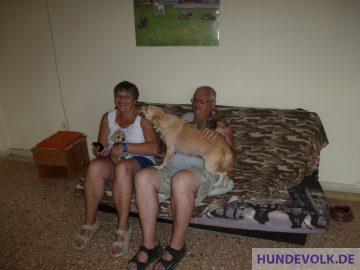 Hunde begrüßen Besucher