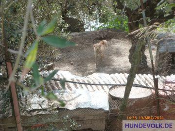 Hühnerhund am 19. März