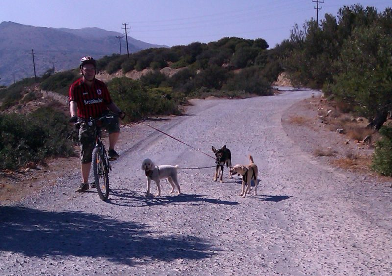 Fahhradfahrt mit mehreren Hunden