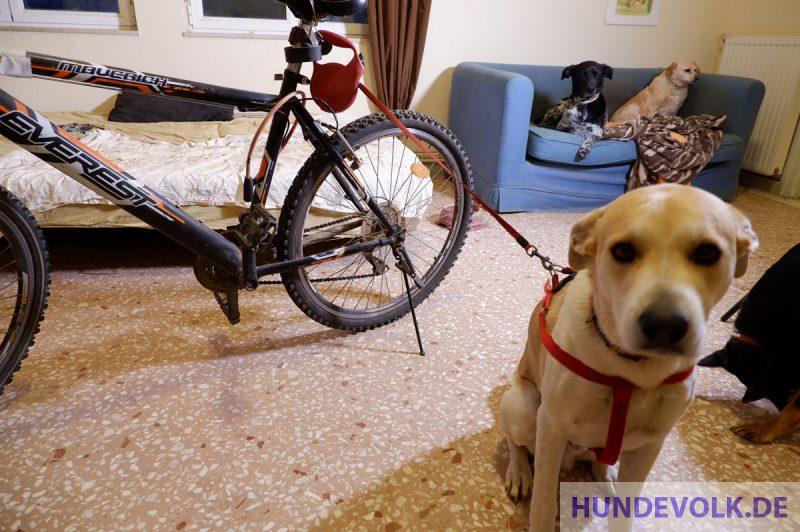 Ausziehbare Hundeleine am Fahrrad