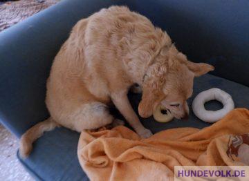 Hund bewacht Spielzeug