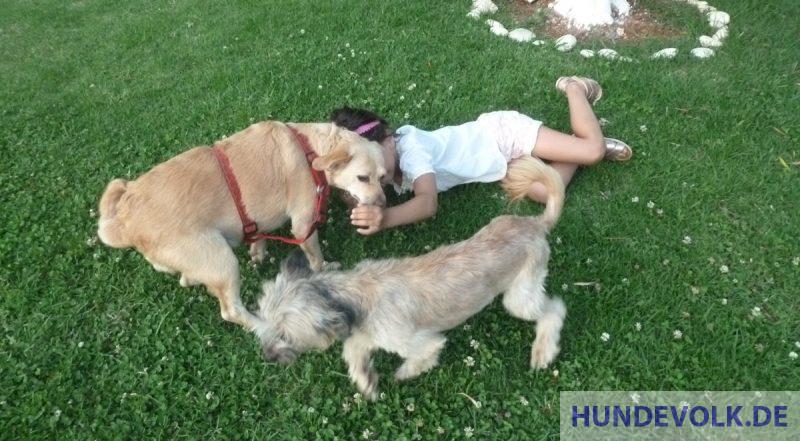 Kind spielt mit Hunden