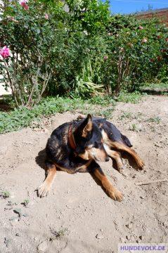Hund nimmt Sonnenbad