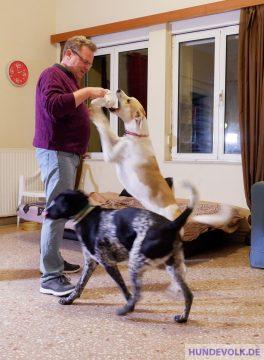 Zieh-Spiele mit Hund