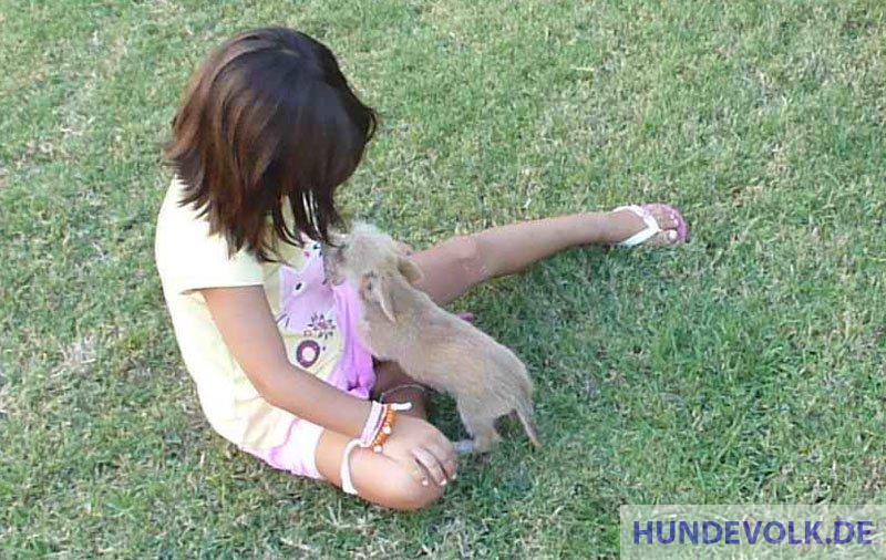 positive Beziehung zwischen Hund und Kind