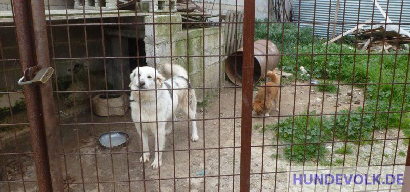 angekettete Hunde